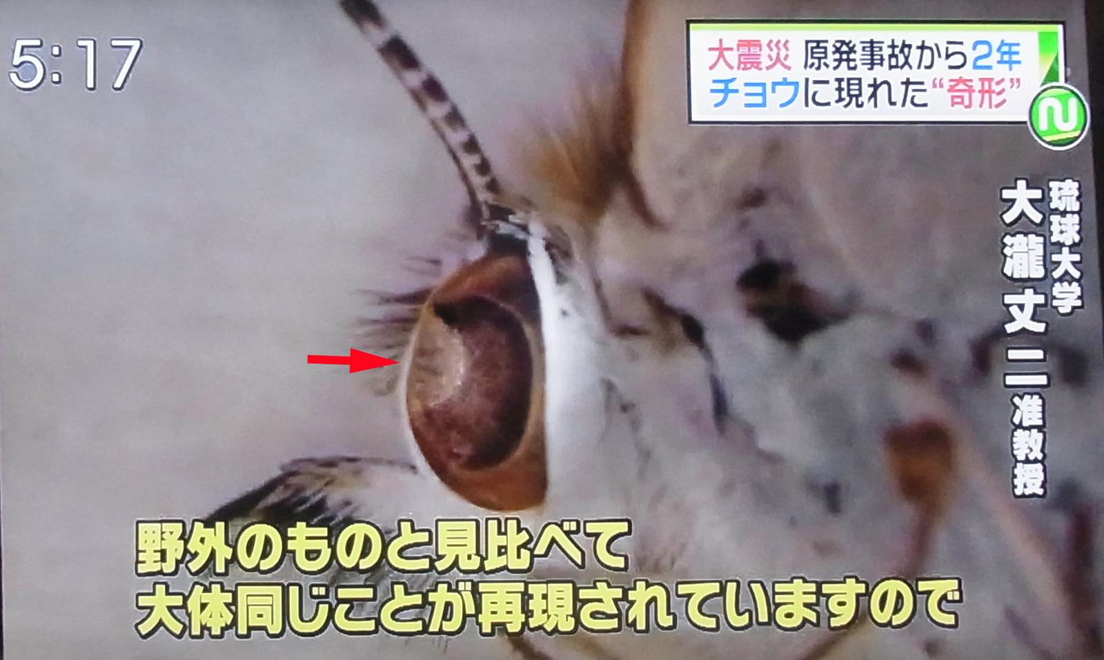 原発ゼロ・脱被曝 どうしたらできる?: 福島原発事故 原発ゼロ・脱被曝 どうしたらできる? 原発